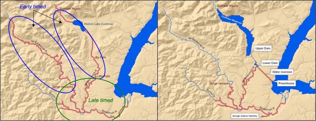 Map showing historic (left) and current (right) distribution of Chinook in the Skokomish River system, before and after construction of the Cushman Dam.