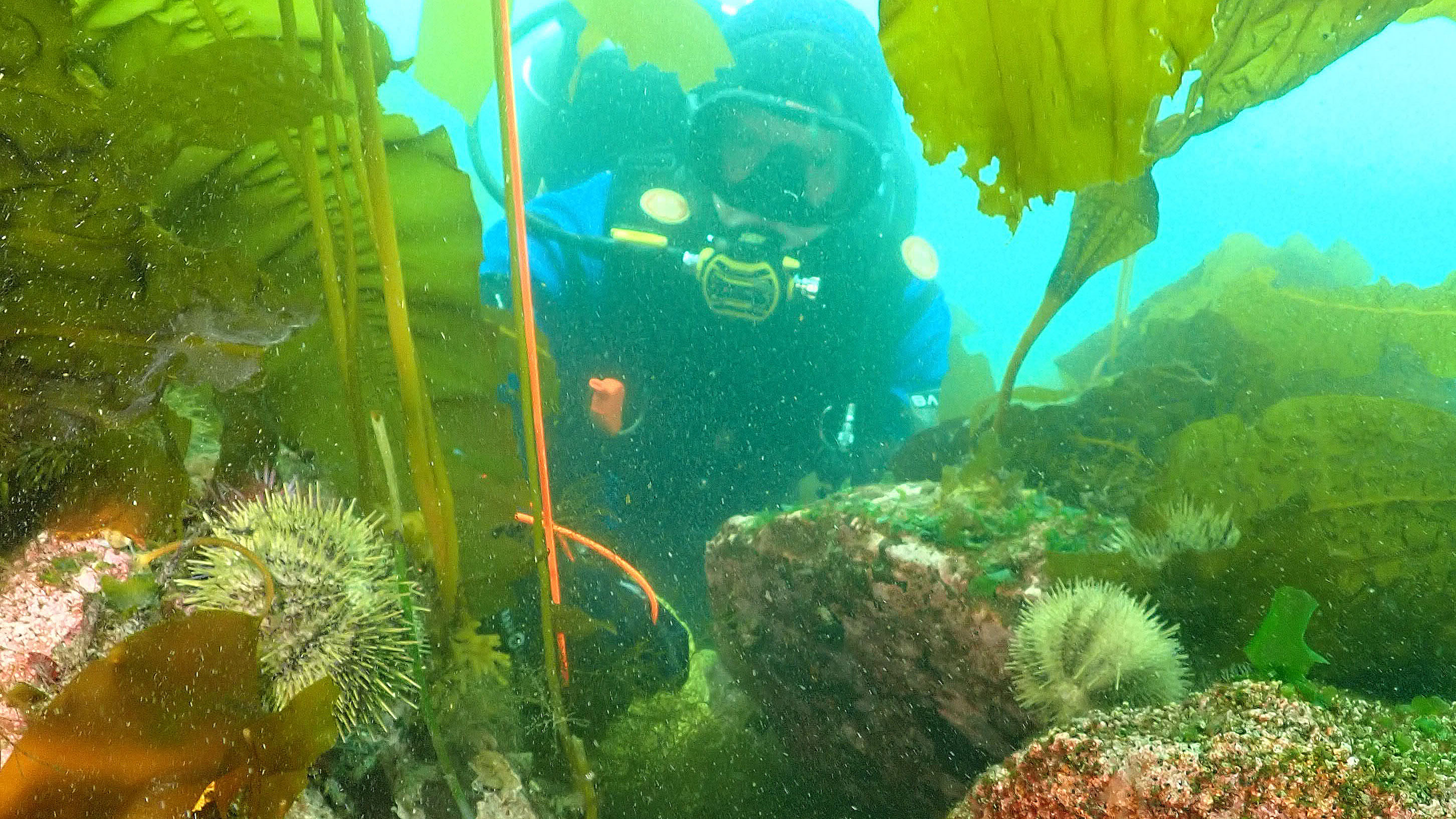 Diver Hank Carson and abalone_cropped.jpg