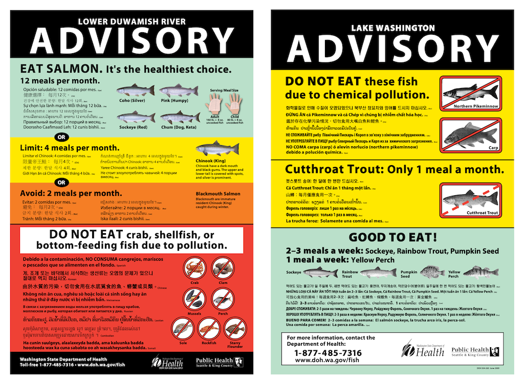 Health advisories for fish species in the Lower Duwamish River and Lake Washington. Images: Washington Department of Public Health