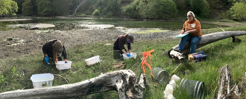 The Washington Sea Grant Crab Team (Emily Grason, Amy Linhart, and Gail Trotter) measures crabs captured at Butterball Cove near Lacey, Washington. Photo: Eric Wagner