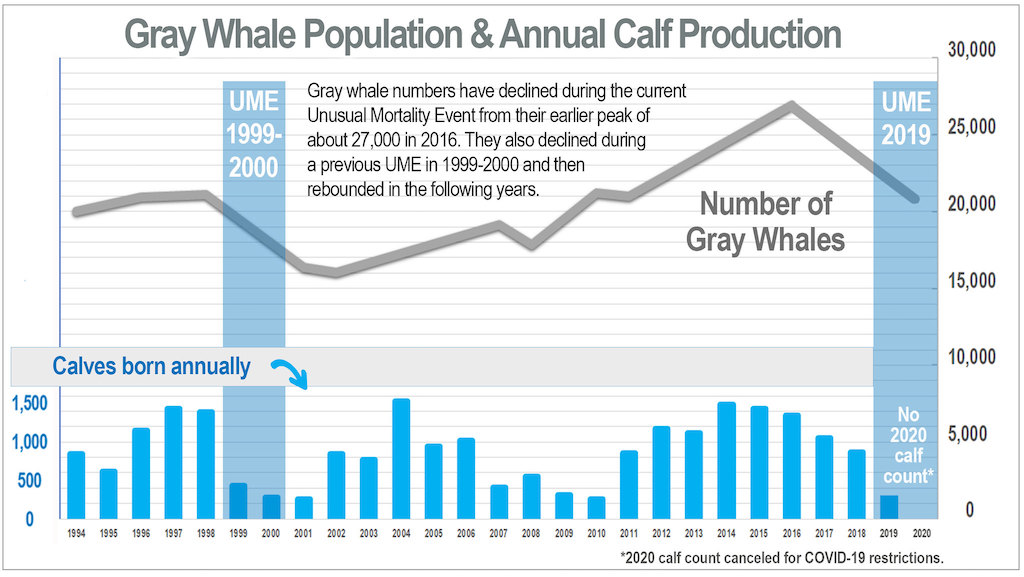 Chart showing gray whale population numbers between 1994 and 2019