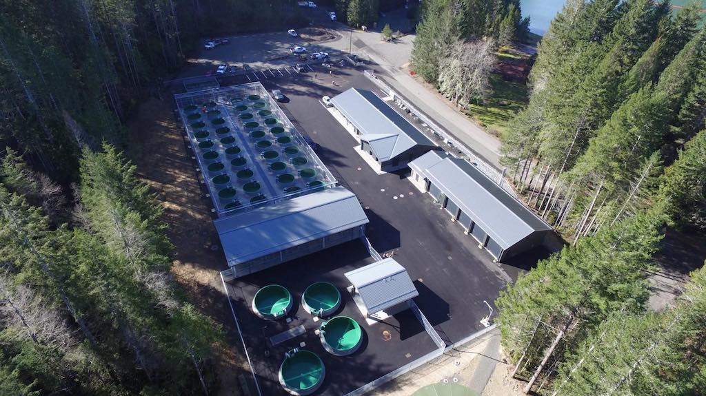Aerial view of the North Fork Skokomish Salmon Hatchery.