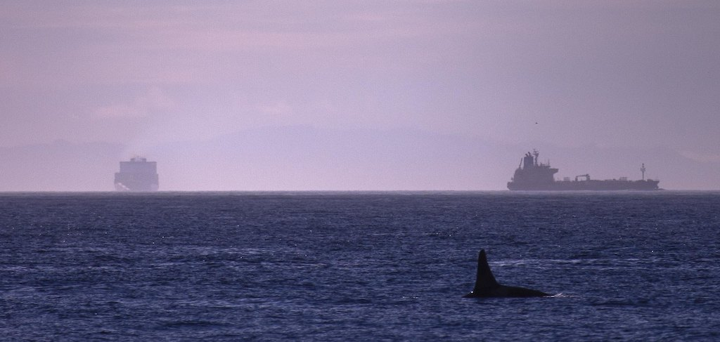 An orca swims near two commercial vessels in the Haro Strait. Photo: Clark Fork Photography (CC BY-NC 2.0)