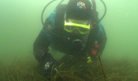 Herring spawn research in Puget Sound. Photo courtesy of NOAA.