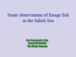 cover slide: Some observations of forage fish in the Salish Sea
