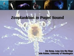 Zooplankton in Puget Sound
