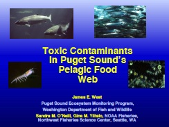 cover slide: Toxic contaminants in Puget Sound's pelagic food web