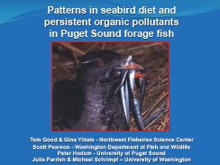 Patterns in seabird diet and persistent organic pollutants in Puget Sound forage fish