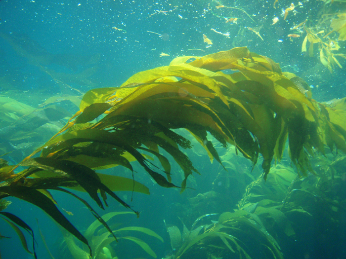 marine life of the pacific northwest a photographic encyclopedia of invertebrates seaweeds and selected fishes