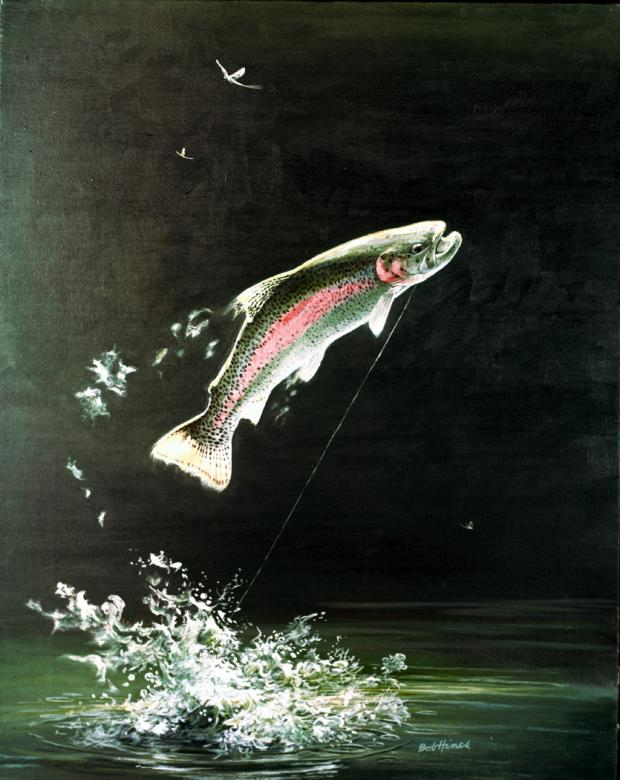 Rainbow Trout (Oncorhynchus mykiss)