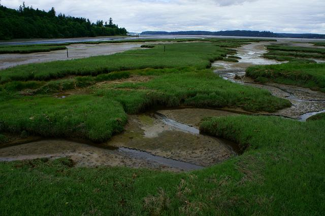 ​Tidal marsh at the Nisqually National Wildlife Refuge in Puget Sound. Photo courtesy of USFWS.