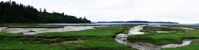 Tidal Marsh Panorama Low Tide; Nisqually National Wildlife Refuge. Photo: David Patte/U.S. Fish and Wildlife Service (CC BY 2.0) https://www.flickr.com/photos/usfwspacific/5844530404