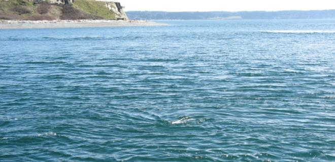 A tidal whirl in northern Admiralty Inlet, Puget Sound, Washington, where currents routinely exceed 3 m/s (6 knots). Image source: University of Washington