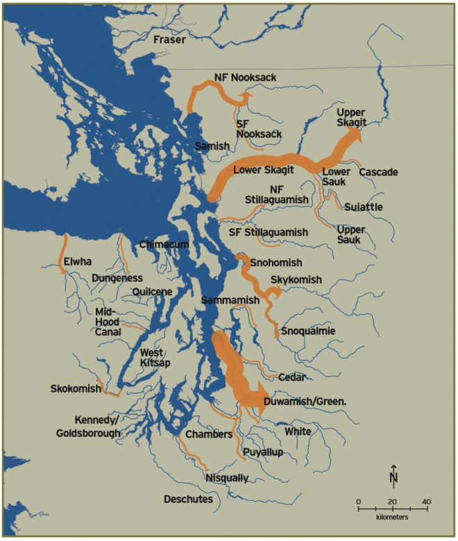 Salmon migrations upstream provide critical nutrients to river ecosystems. Here, width of arrows indicates relative number of Pacific chinook salmon currently migrating into main rivers.  The magnitude of anadromous salmon returning to rivers is an indication of the potential for transport of marine-derived nutrients into watersheds.
