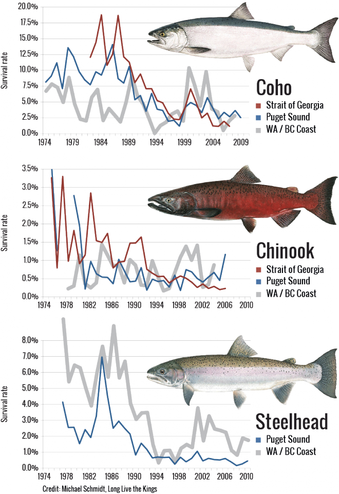 Smolt-to-adult salmon return rates. Source: Michael Schmidt, Long Live the Kings