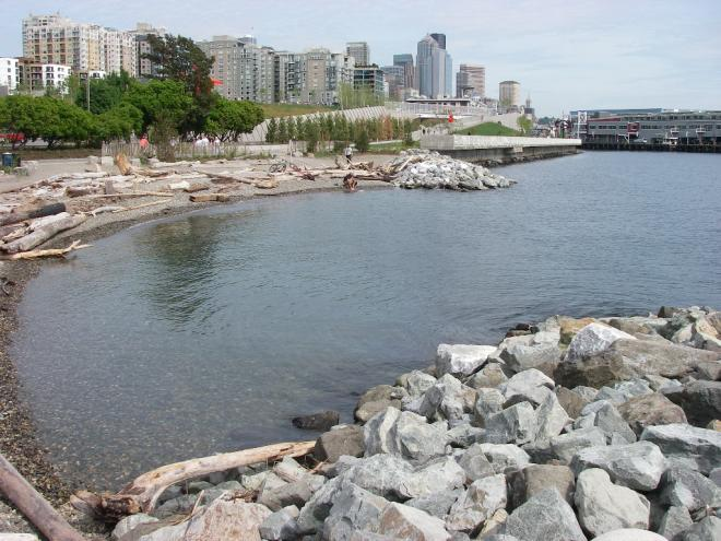 Pocket beach at Olympic Scupture Park. The pocket beach replaced riprap armoring, and the habitat bench was added as a shelf to the base of the seawall.