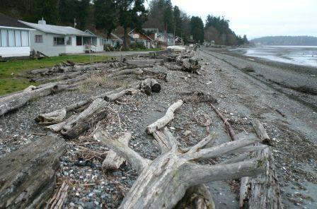 Bulkhead removal and beach nourishment. Samish Is. Photo: Jim Johannessen, Coastal Geologic Services