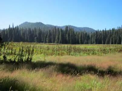 Meadow in Gifford Pinchot National Forest where cranes were observed in 2012.
