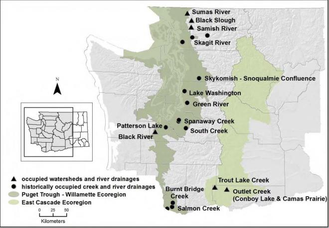 Washington drainages documented to have been occupied by Oregon spotted frogs.
