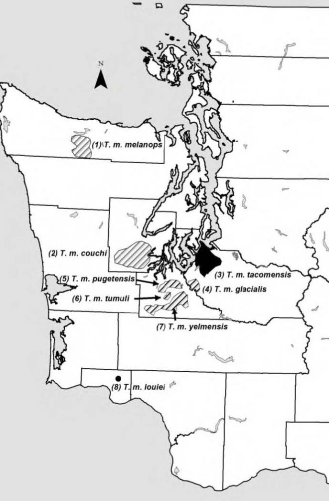 Ranges of 6 extant (diagonal lines) and 2 extinct (black) subspecies of T. mazama in Washington (Hall 1981).
