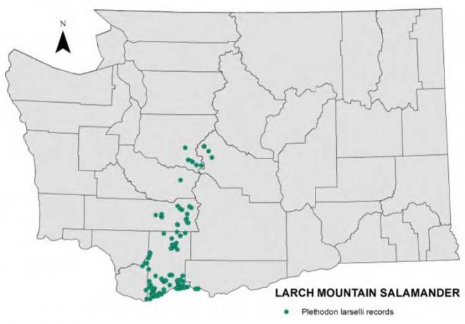 Records of Larch Mountain salamander in Washington through 2011.