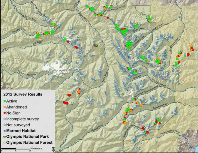 Olympic marmot habitat and monitoring results, 2012 (courtesy P. Happe, Olympic National Park).