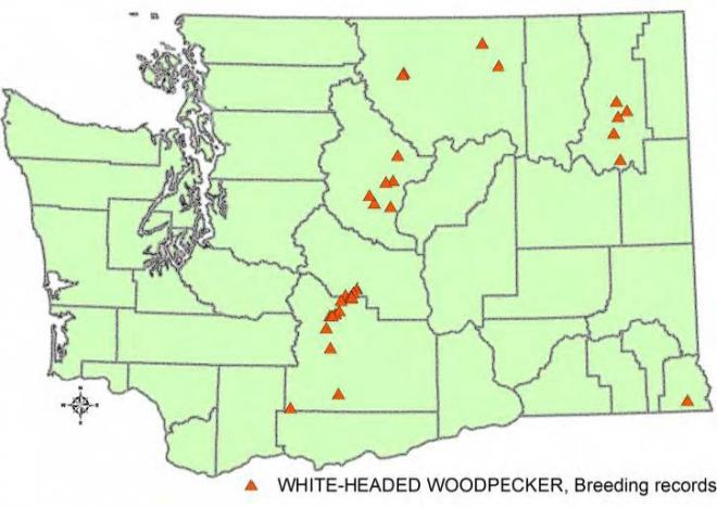 Records of white-headed woodpeckers in Washington (WDFW data).