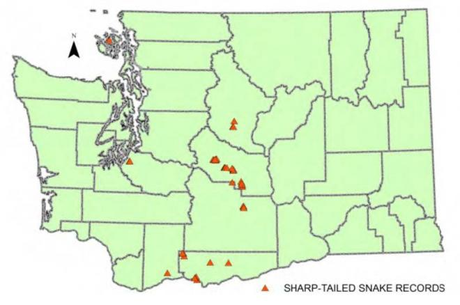 Records of common sharp-tailed snakes in Washington (WDFW data).