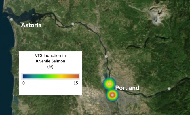 The percent of juvenile salmon at five locations in the Columbia River expressing vitellogenin (VTG), an indicator of exposure to endocrine disrupting compounds. Juvenile salmon do not normally produce VTG. Adapted from [7].