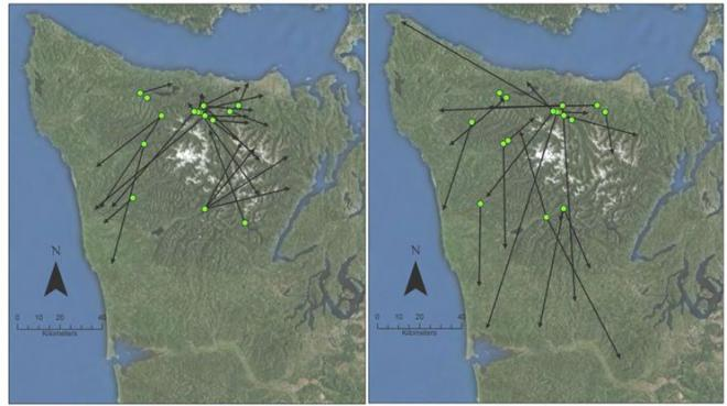 Arrows illustrating straight-line distances from release sites to the center of home ranges of 27 females (left) and 21 males (right) on the Olympic Peninsula, 2008-2011.