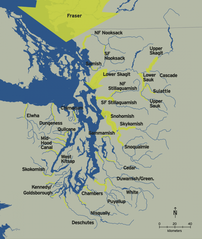 Annual freshwater inflows from Puget Sound rivers are one of the major drivers of marine circulation patterns. Width of arrows indicates the average volume of annual fresh water flows from Puget Sound streams.
