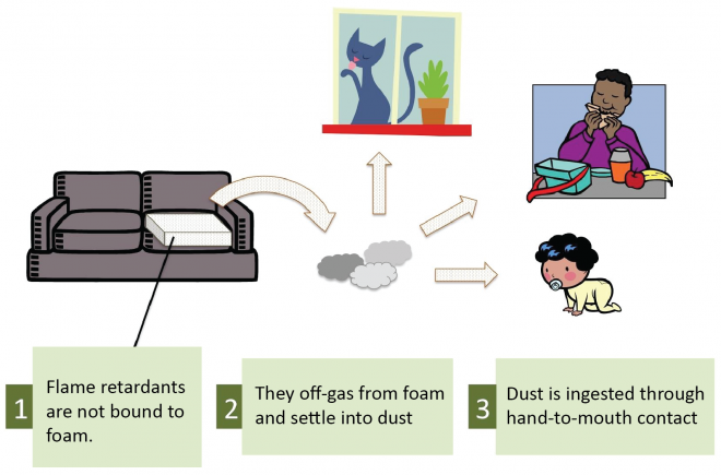 How are we exposed to flame retardant chemicals? Flame retardants not bound to foam off-gas and settle into dust that can be ingested upon contact. Diagram courtesy: Green Science Policy Institute