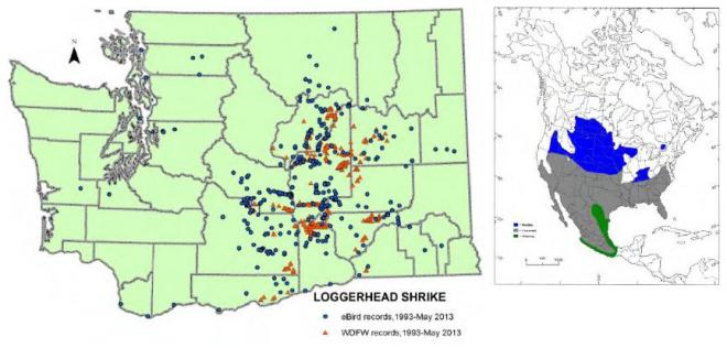 Left, observation records of loggerhead shrikes in Washington, 1993-May 2013 (eBird 2013, WDFW WSDM database); right, breeding (blue), year-round (gray), and winter-only ranges (green) in North America (from Wiggins 2005).