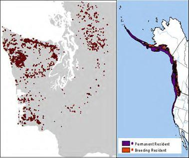 Range of the marbled murrelet (right, Ridgely et al. 2007), and breeding season occurrences in Washington, left.