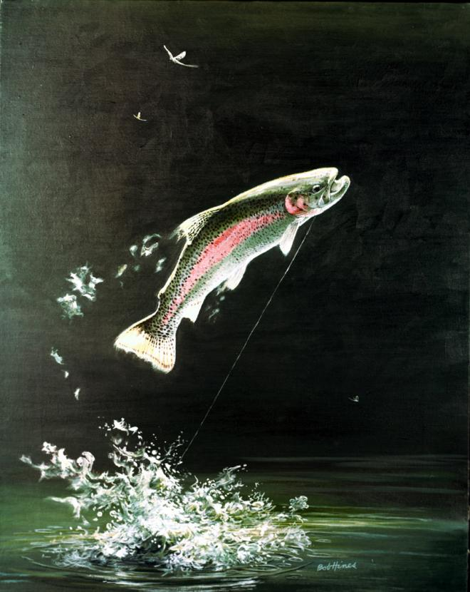 Rainbow trout (Oncorhynchus mykiss). Image by Robert Hines. Courtesy U.S. Fish and Wildlife Service.