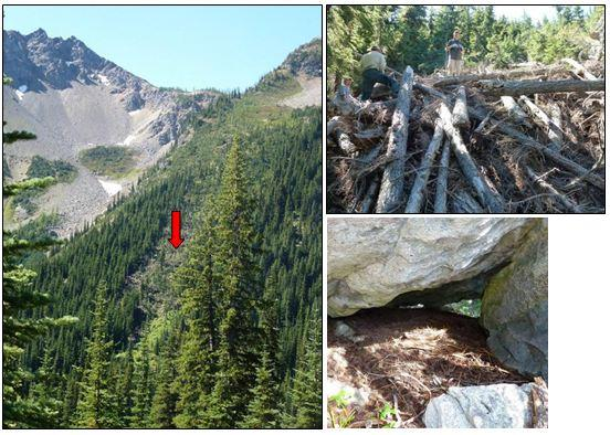 Wolverine dens, found in Washington's North Cascades with the aid of telemetry in 2012, were in a space under boulders (lower right) and in a log pile in an avalanche chute (left and upper right; photos by Scott Fitkin, Jeff Heinlen WDFW).