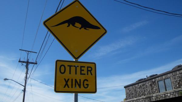 Otter crossing street sign. Photo: Joe Gaydos