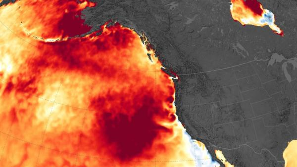 """Map showing a marine heat wave known as """"the blob"""" which spread across the northeastern Pacific Ocean from 2014 to 2016. Image: Joshua Stevens/NASA Earth Observatory, Data: Coral Reef Watch"""