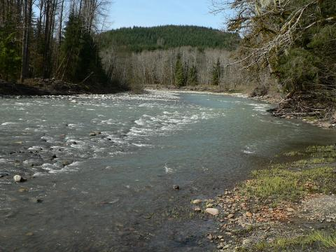 The Stillaguamish River is one of the rivers in the Puget Sound region closed to fishing. Photo by Walter Siegmund.