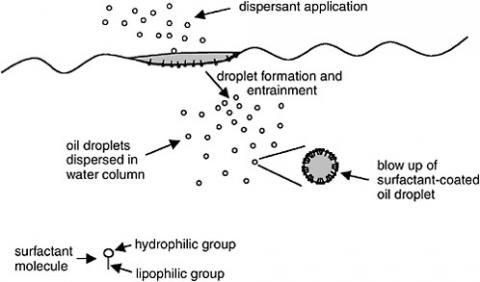 Figure 1. Chemical dispersants are designed to increase the formation of oil droplets that become entrained in the water column1. This is Figure 3-1 from NRC (2005).