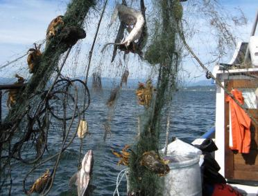 Derelict fishing gear with animal carasses found by the USFWS Puget Sound Coastal Program. Credit Joan Drinkwin/USFWS https://flic.kr/p/8TX8CQ (CC BY 2.0)