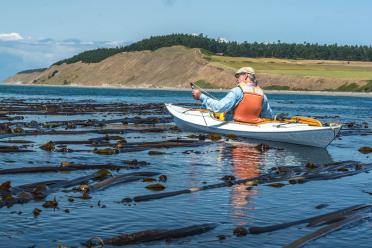 Volunteer Vernon Brisley surveys a bull kelp bed near Ebey's Landing on Whidbey Island as part of the Island County MRC regional monitoring project. Photo: Rich Yukubousky