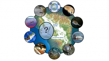 Key hypotheses include bottom-up and top-down processes and additional factors such as toxics, disease, and competition.  Graphic: Michael Schmidt, Salish Sea Marine Survival Project