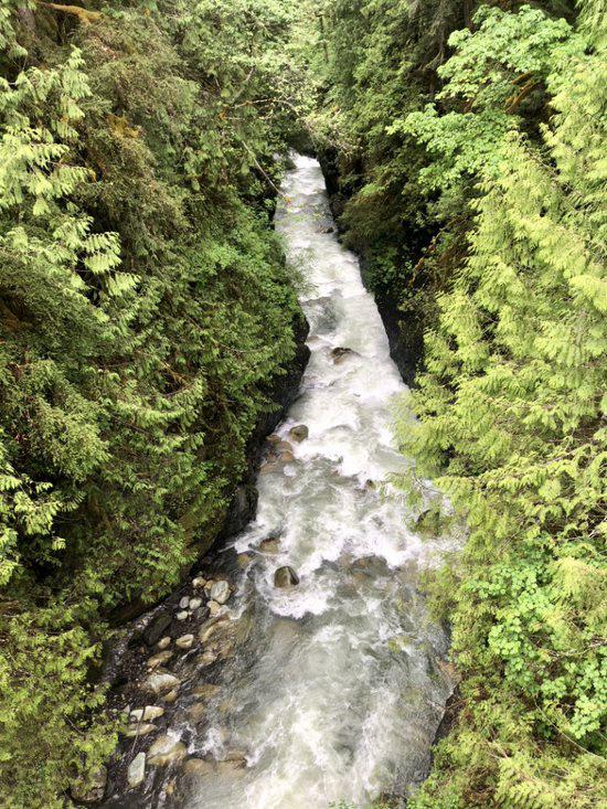 A tributary of the Nooksack River. Photo courtesy NOAA Fisheries.