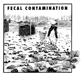 Fecal contamination graphic (page 39)