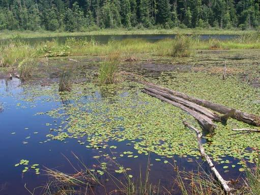 Moss Lake, part of a bog wetland complex in Moss Lake Natural Area. Photo by Jennifer Vanderhoof.