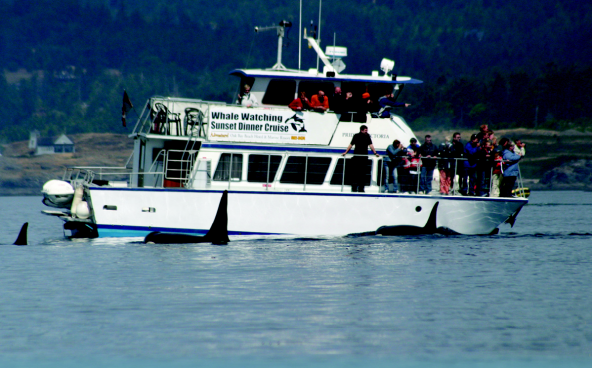 Whale watching boat in Puget Sound.