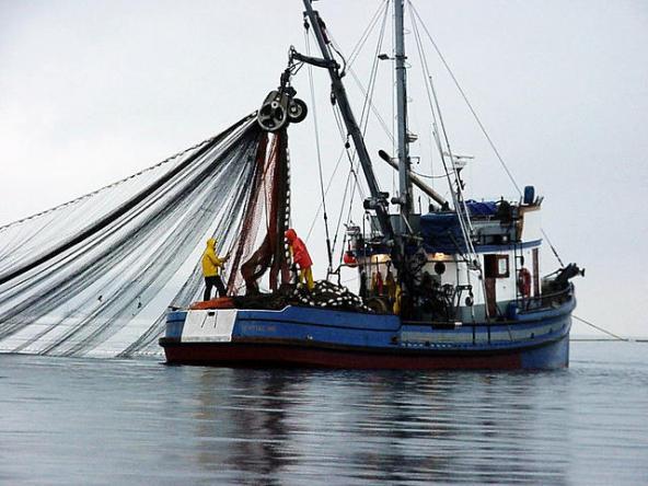 Block seine fishing. Image courtesy of WDFW.