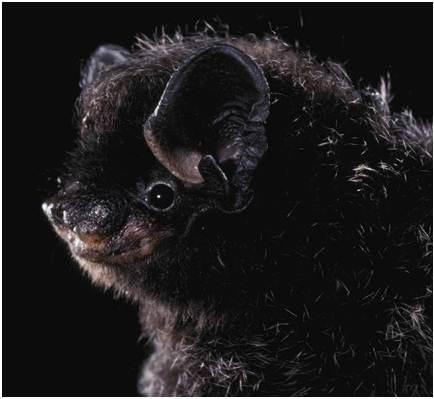 Image copyright Merlin D. Tuttle, Bat Conservation International, www.batcon.org