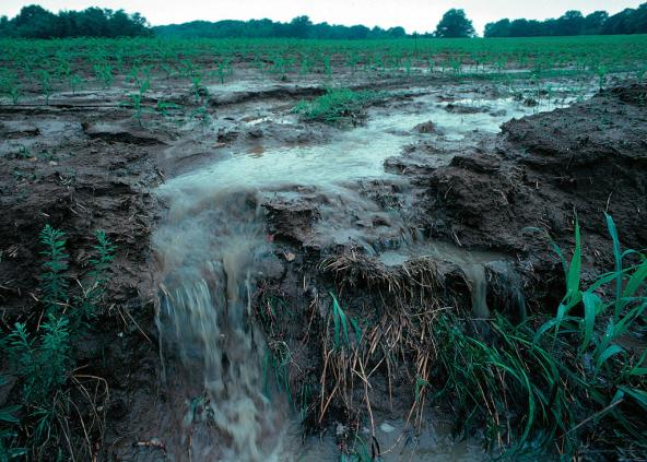 Runoff of nutrients from farm fields is one of the primary sources of nutrients in many coastal waterbodies. Photo: Lynn Betts | USDA NRCS (CC BY 2.0) https://flic.kr/p/7NwA1n